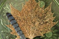 Кленовый лист шнурка с пером синей птицы Стоковая Фотография