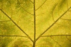 Кленовый лист Стоковые Фотографии RF