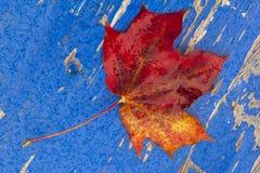 Кленовый лист Стоковая Фотография RF