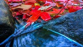 кленовый лист Стоковые Изображения