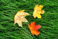 Кленовый лист 3 Стоковые Фото