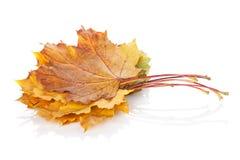 клен листьев осени цветастый Стоковая Фотография