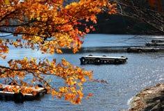 Клен и док на озере Стоковые Изображения RF