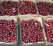 Клети вполне и корзина больших и сочных зрелых красных вишен на s Стоковые Фотографии RF