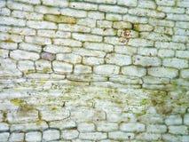 Клетка аквариумного растени Стоковые Фото