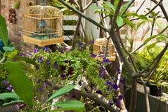 Клетка и завод птицы в саде Стоковое Фото