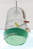 Клетка птицы с желтой птицей внутрь Стоковые Изображения
