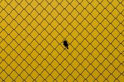 Клетка птицы Стоковые Фотографии RF
