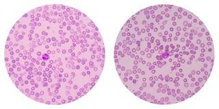 Клетки крови на белизне Стоковое Изображение