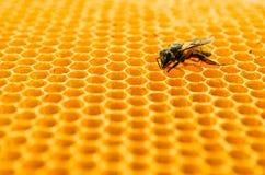 Клетки меда пчел стоковая фотография rf