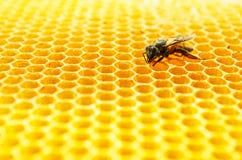 Клетки меда пчел стоковые фотографии rf