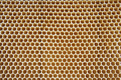 Клетки меда Стоковое Фото