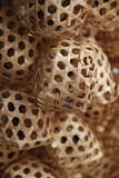 Клетки сверчка Стоковая Фотография