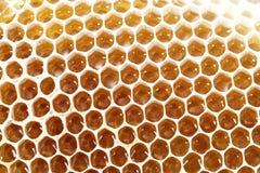 Клетки сота воска пчелы меда с сладостным медом Стоковое Фото
