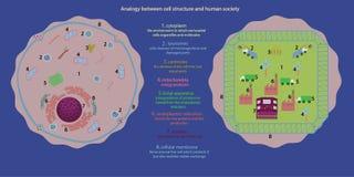 Клеточная структура Стоковая Фотография RF