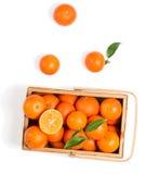 Клеть зрелых tangerines с листьями, взгляд сверху Стоковая Фотография
