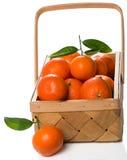 Клеть зрелых tangerines с листьями Стоковое Изображение RF