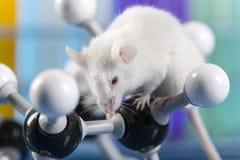 Клинические испытания в лаборатории Стоковое Изображение RF