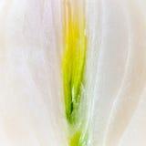 клиппирование предпосылки отрезало изолированную половиной белизну пускать ростии путя луков лука Стоковая Фотография