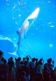клиппирование 3d над путем представляет кита акулы тени белым Стоковое Изображение RF