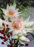 Клиппирование Serruria Стоковая Фотография RF