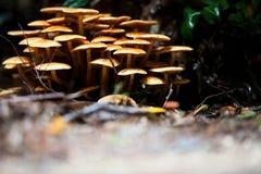 Клирос гриба Стоковые Фото
