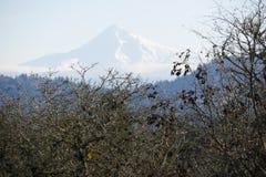 Клобук Mt в Орегоне Стоковая Фотография RF
