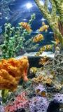 Клоуны моря Стоковые Изображения RF