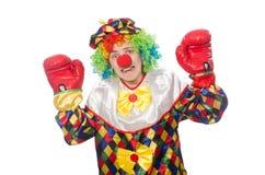Клоун при перчатки бокса изолированные на белизне Стоковое Фото