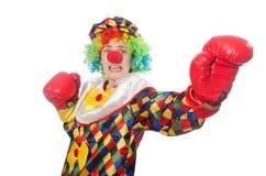 Клоун при перчатки бокса изолированные на белизне Стоковые Изображения