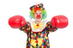 Клоун при перчатки бокса изолированные на белизне Стоковая Фотография