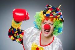 Клоун с перчатками бокса в смешной концепции Стоковые Фото