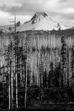 Клочковатый, который сгорели ряд каскада Mt. Вашингтона Орегона горного пика Стоковые Изображения