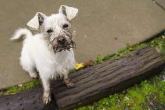 К собаке выкапывать отверстие большая потеха Стоковые Фото