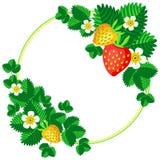 Клубника Буша зацветая с ягодами и цветки обрамляют предпосылку для вашей иллюстрации вектора текста Стоковое Изображение RF