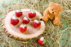 Клубника взбрызнутая с сахаром и плюшевым медвежонком на пне дерева Стоковая Фотография
