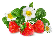 Клубника и цветок клубники на белизне Стоковые Изображения RF