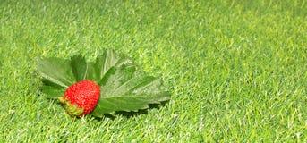 Клубника на зеленой траве Стоковое фото RF