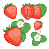 Клубника Собрание всех и отрезанных ягод клубники Стоковое фото RF
