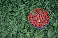 Клубники в корзине на траве Стоковое Изображение