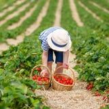Клубники рудоразборки мальчика маленького ребенка на ферме Стоковая Фотография