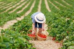 Клубники рудоразборки мальчика маленького ребенка на ферме, outdoors Стоковое Фото