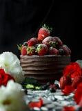 Клубники Rpe в шоколадном торте на черноте Стоковая Фотография RF