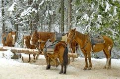Клуб катания лошади в горе Rila Стоковые Фото