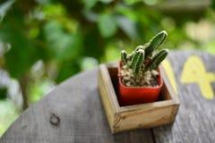 Клуб обитый с диамантами или кактусом на таблице с зеленым g Стоковые Фото