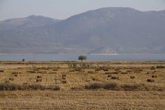 К югу от озера Burdur Стоковые Изображения RF