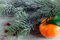 Клюква, tangerine и ветви рождественской елки Стоковое Изображение