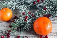 Клюква, tangerine и ветви рождественской елки Стоковая Фотография