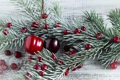 Клюквы, вишни и ветви рождественской елки Стоковые Фото