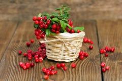 Клюквы ягод в плетеной корзине на деревянной предпосылке Стоковая Фотография